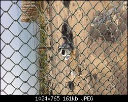 Click image for larger version.  Name:IMG_1678.jpg Views:389 Size:160.9 KB ID:298105
